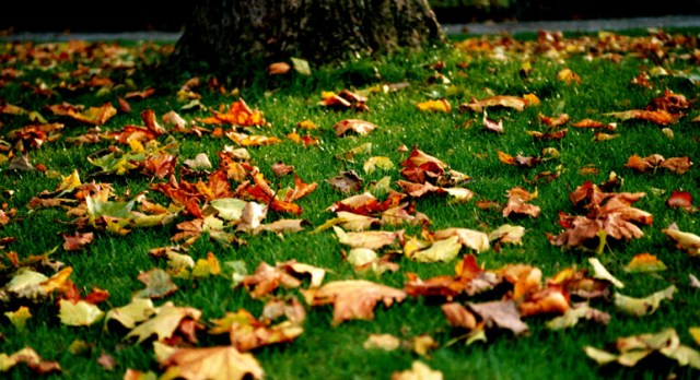 Fallen_Leaves_by_facella