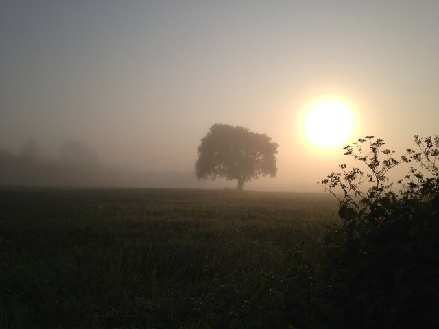 Morgensonne, Nebel