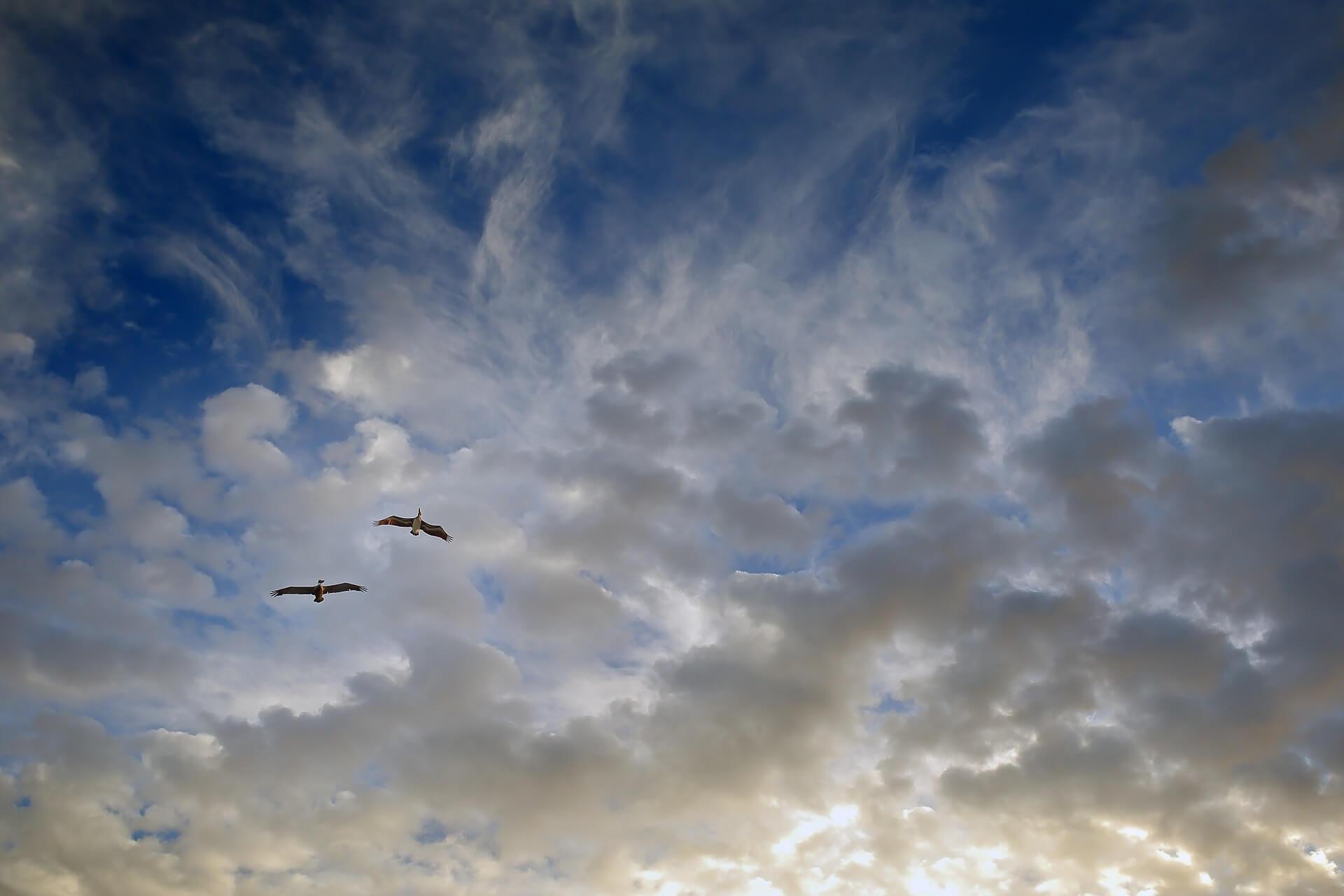 birds-1059307_1920.jpg