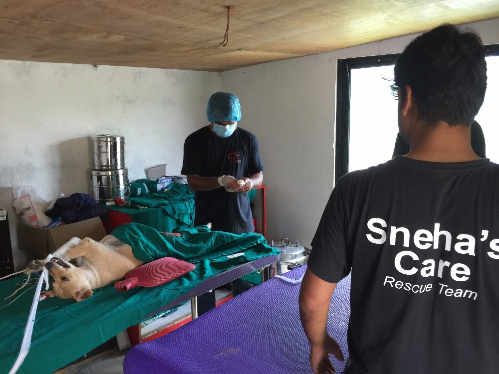 sneha_spaying a dog at shelter's clinic