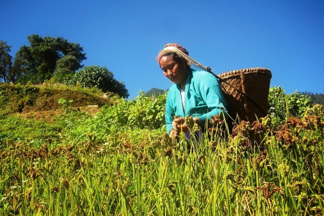 Trekking de Khopra Danda au Népal