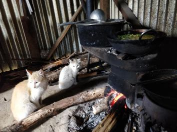 ilam hangetham lunch cat fire