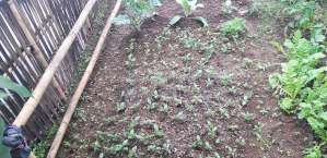 NCDF supported farmer nursery at Namsaling (1)-K300