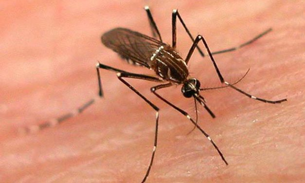 Four found infected with dengue virus