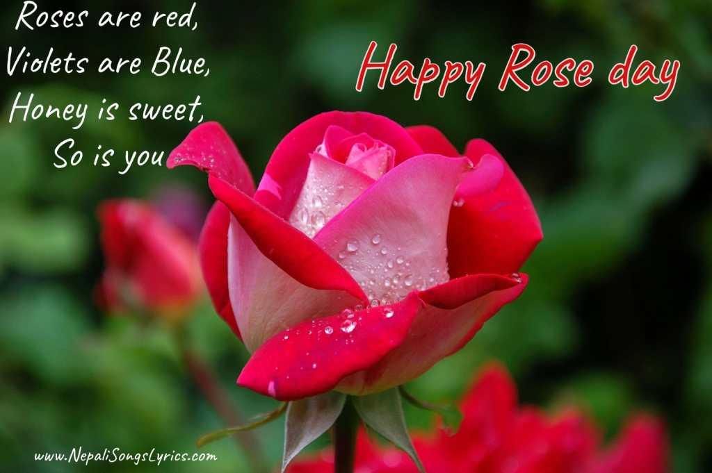 rose day wish photos