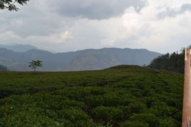 Everest Tea Garden, Bhotechaur  (Mini Illam)