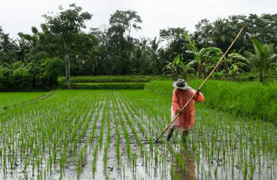 The Philippines' Decaying Agriculture Industry