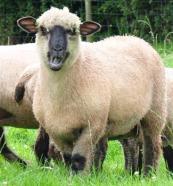 partridge-farm-meats_150120_image
