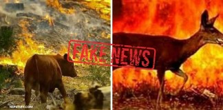 Fact Check: Do the wildfire photos viral on social media belong to Nepal?
