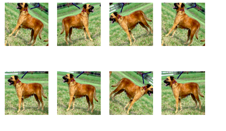 Transfer learning dogs 2