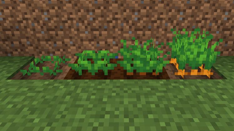 Minecraft Carrots