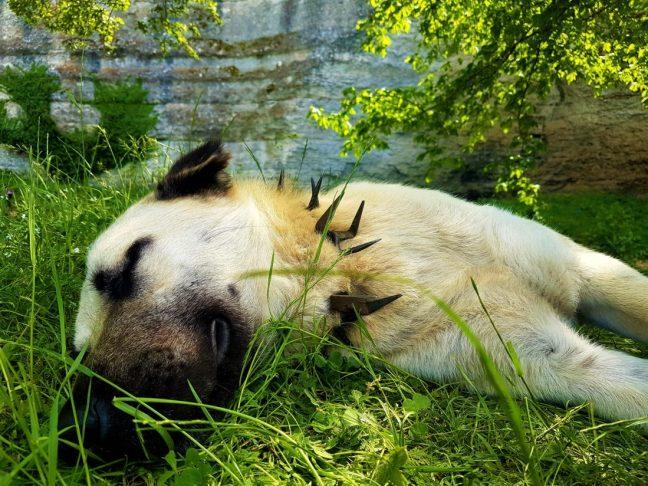 Kanara Kayalıkları'nda ki köpeğim