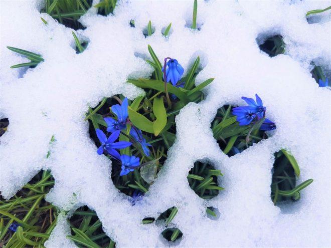 Mavi Yıldız Çiçeği Kaplı Kadıralak Yaylası