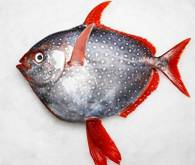Weve Found The First Truly Warm Blooded Fish