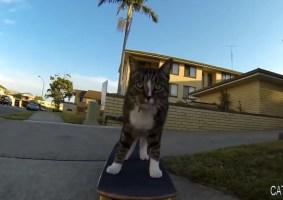 Video: O gato skatista