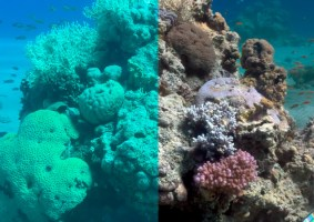 Oceanógrafa cria algoritmo que retira água de fotos no mar