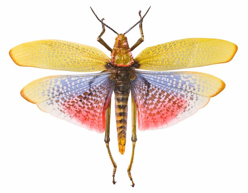 Smithsonian seleciona os insetos mais interessantes do mundo