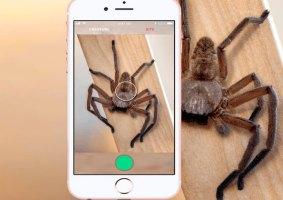 Critterpedia, um app para identificar aranhas e cobras