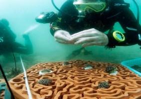 Peças de argila em 3D devem estimular o crescimento dos recifes de coral