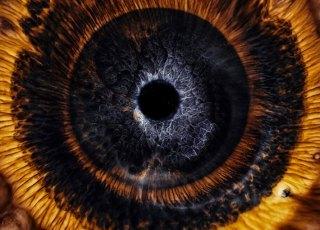 Curta explora o fenômeno iridescência como olhos