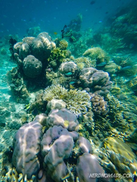 Coral reef outside of Kanawa Island.