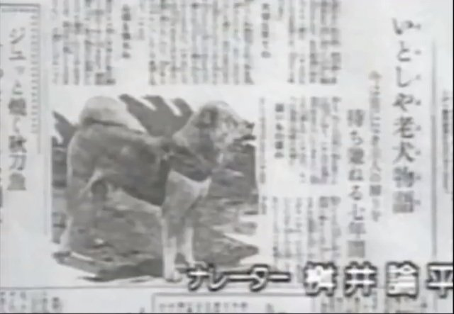Hachiko in the Japanese newspaper