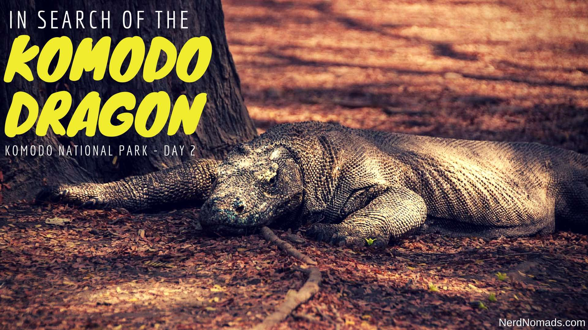 In Search Of The Komodo Dragon – Komodo National Park Day 2