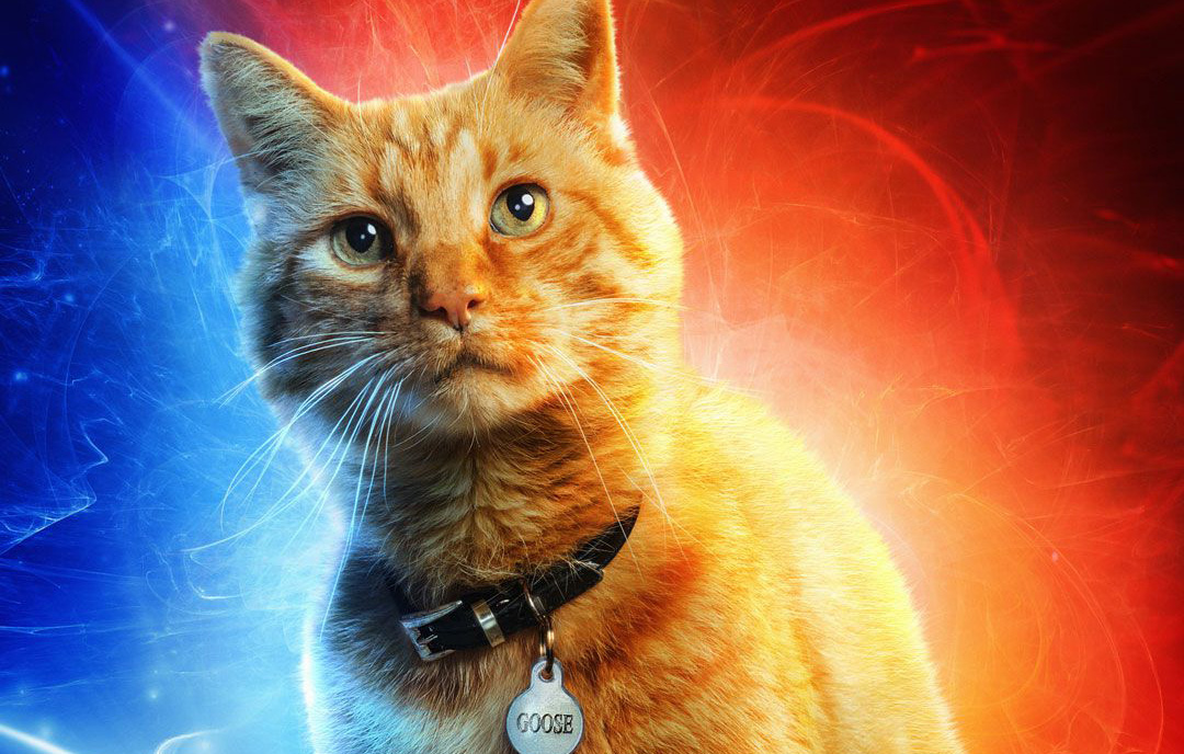 https://i2.wp.com/nerdreactor.com/wp-content/uploads/2019/01/Captain-Marvel-Goose-Cat.jpg