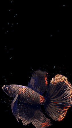 Betta Fish Live Wallpaper-3