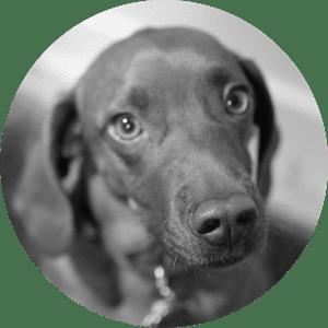 Arya the dog