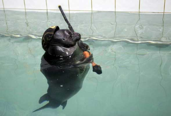 Meanwhile, in Russia… Seal hunts you!