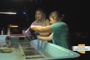 Sea Life Aquarium in Tempe is saving endangered coral