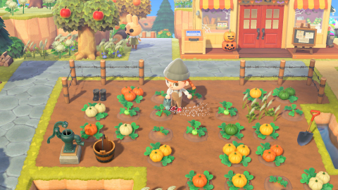 Deck out your home and island for all your awesome autumnal occasions by first purchasing pumpkin starts in-game from Leif year-round or from Nook's Cranny during October.