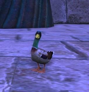 Rift Ducklar