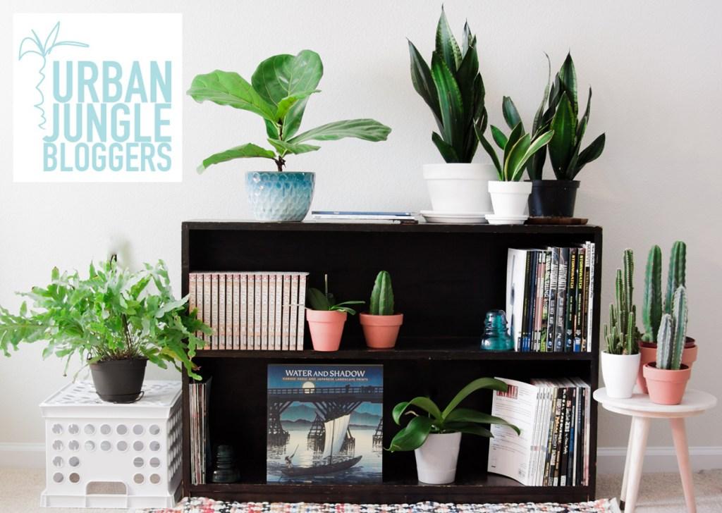Plant Shelfie