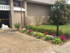 Ripley Public Library Spring Flowers