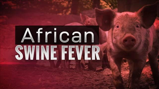 2500 pigs died due to African Swine Fever in Assam