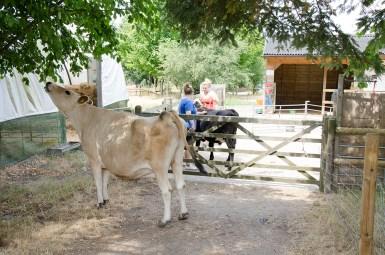 farm animals rustic 4