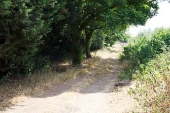 rustic walkway tree