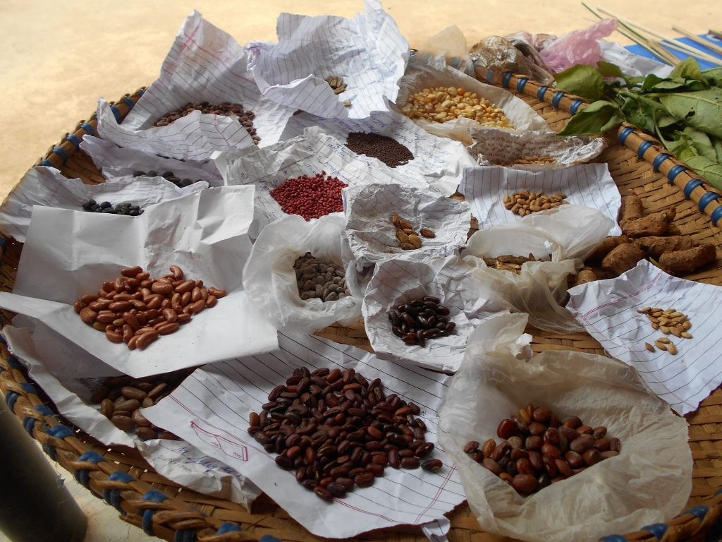 Seeds of indigenous plants selected for the school garden.