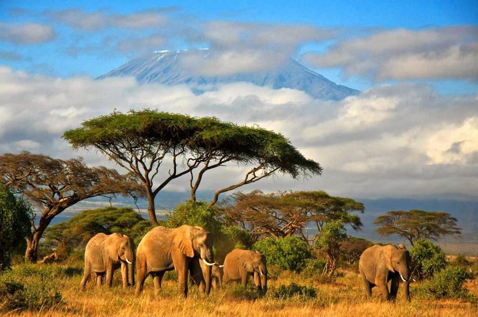 Рисунка – Африканската савана