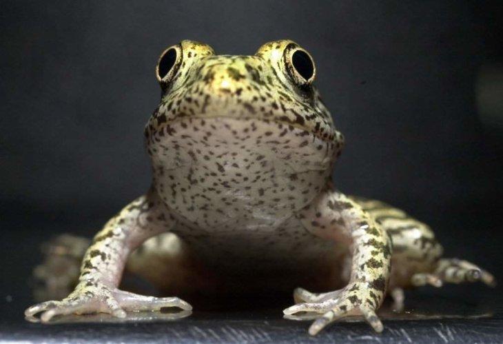 Областное Минприроды подвергли жесткой критике за носорогов, крокодилов и мисисипскую лягушку