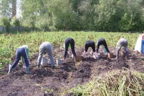 Тольяттинских дачников не будут пускать на садовые участки