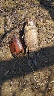 В Тольятти не подтвердилось сообщение о массовой гибели рыб в искусственном водоеме