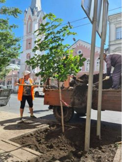 В Самаре продолжается озеленение исторического центра