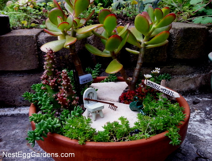 Mini Cactus Sale