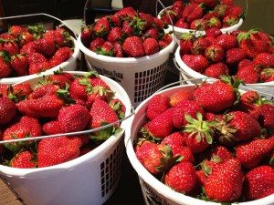 Strawberries-picked-this-morning