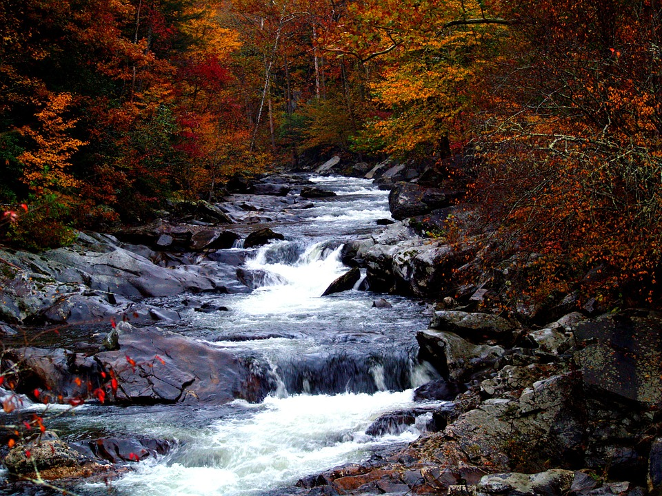 Poetry: The Fall of Autumn