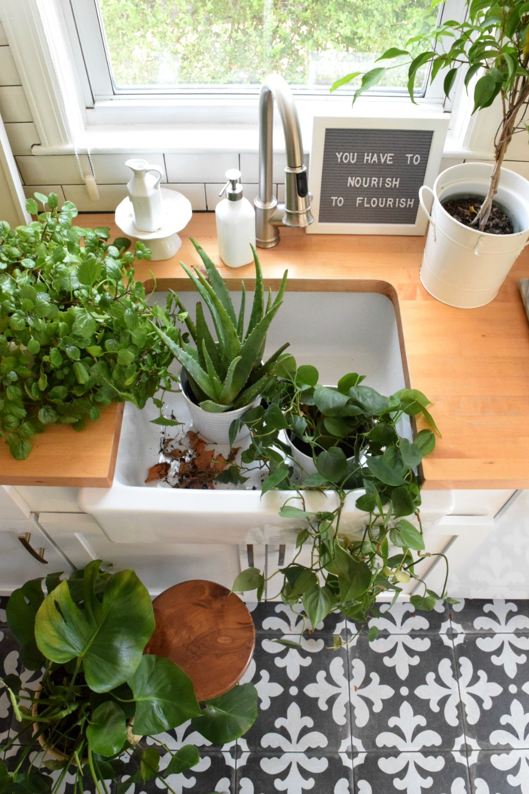 House Plants: 5 House Plants That Are Low Maintenance- My Tips On