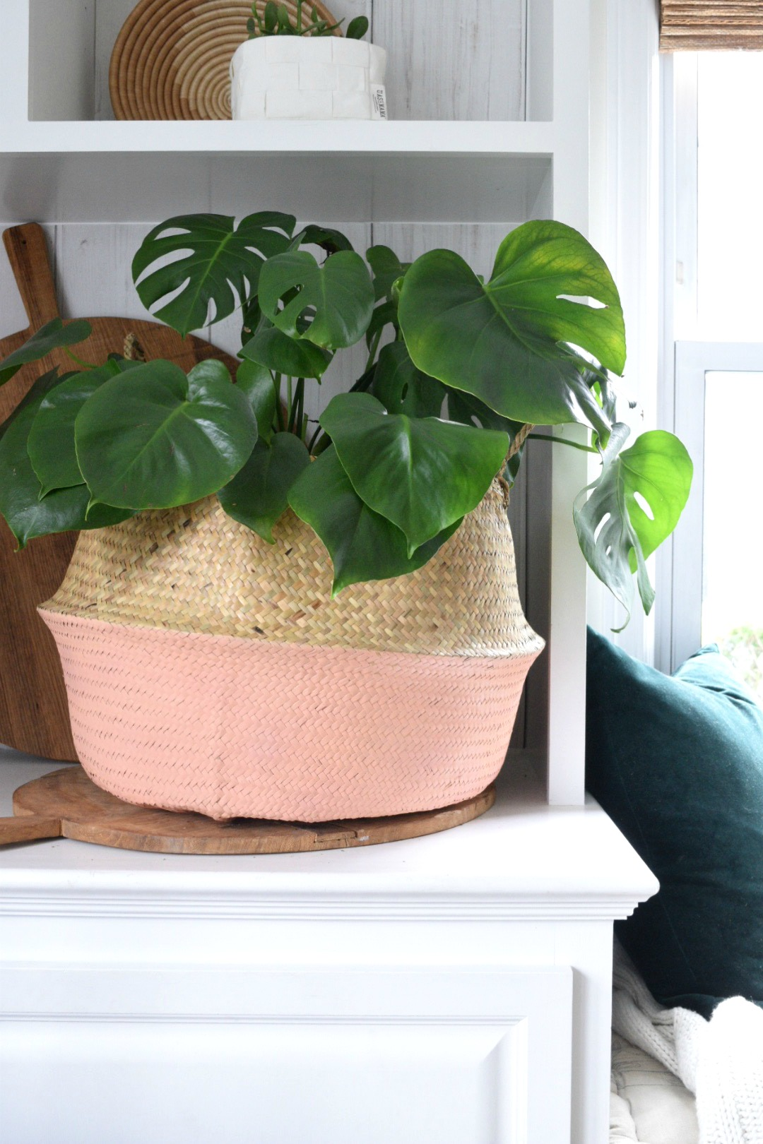 Friday Favorites- Baskets for Houseplants and Tips!